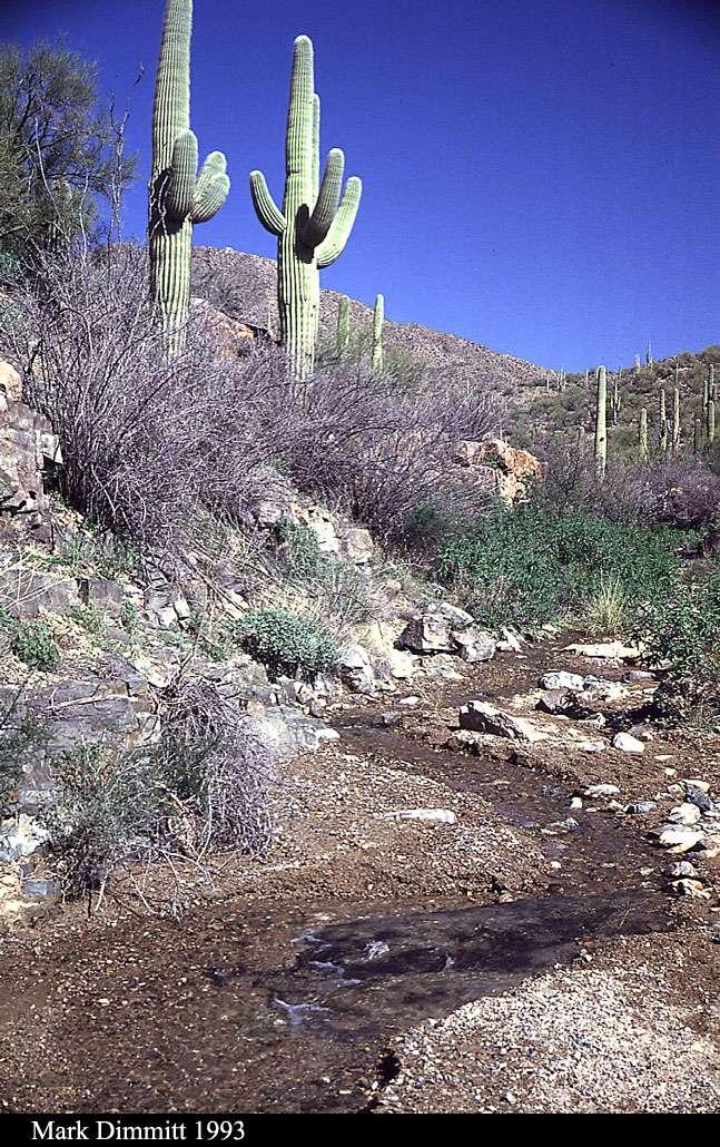 Sonoran Desert Flowing Arroyo near ASDM