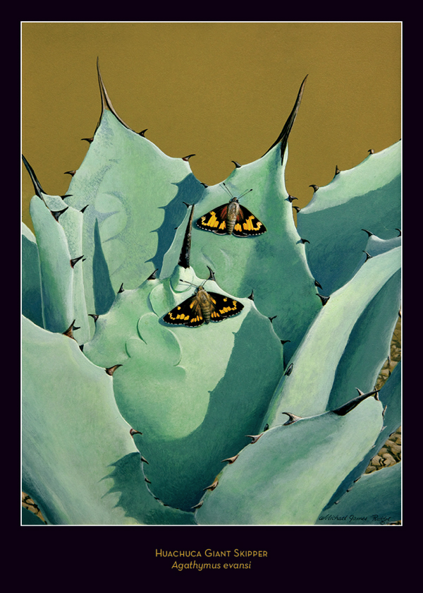 Acrylic Painting of Huachuca Giant Skipper