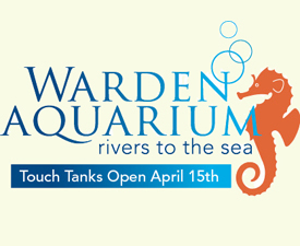 Warden Aquarium - Touch Tanks Open April 15th 2013
