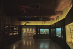 Thumbnail of Reptiles & invertebrates Room - 2016