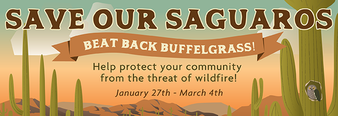Save our Saguaros - Beat Back Buffelgrass! Help protect your community from the threat of wildfire. January 27th - March 4th, 2018