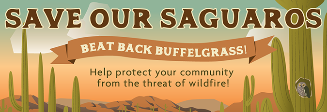 Save our Saguaros - Beat Back Buffelgrass! Help protect your community from the threat of wildfire. January 26th - March 3rd, 2019