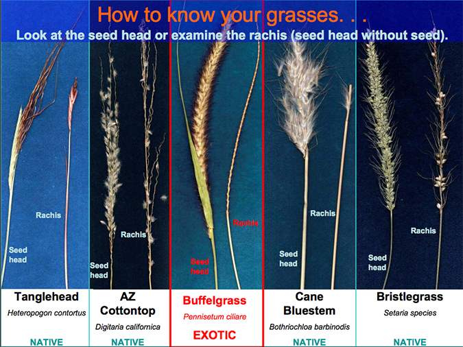 Comparison of different grasses