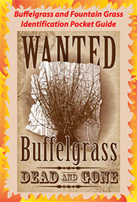 Buffelgrass Identification Guide Cover