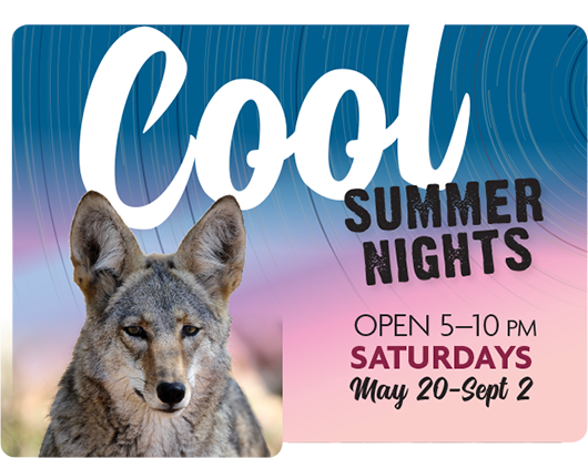 Cool Summer Nights - Open 5-10pm Saturdays May 20-Sept 2