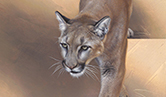 Cougar Descending a Staircase by Andrew Denman