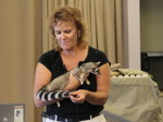 Educators meet a ringtail