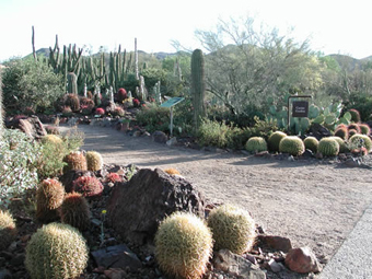 View of the entrance to the cactus garden