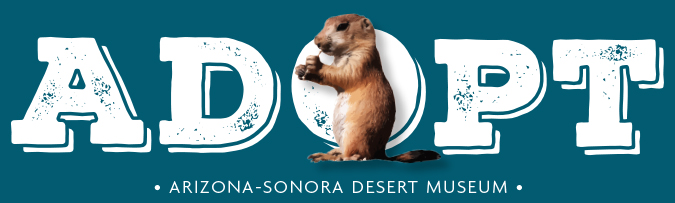 Prairie Dog Adoption Center