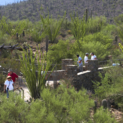 Guests on the Desert Loop Trail