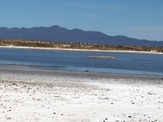 Salt flats in Pinacate Biosphere Reserve
