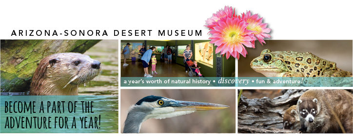 Images of the Desert Museum