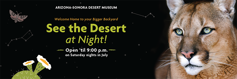See the Desert at Night! - Open until 9:00 p.m. on Saturday nights in July 2020