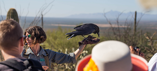 Raptor trainer with chihuahuan raven