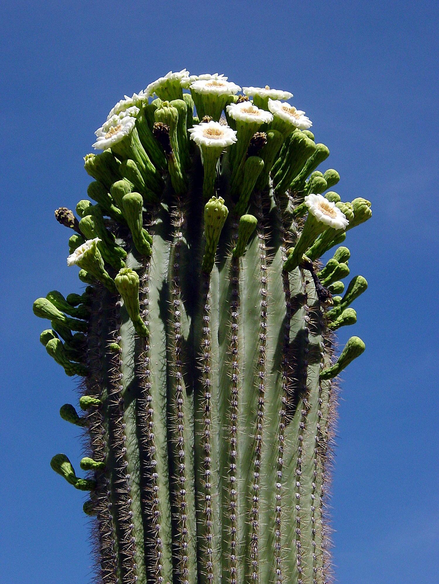 Las 10 plantas mas asombrosas del mundo