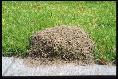 Image Result For Chinch Bug Killer