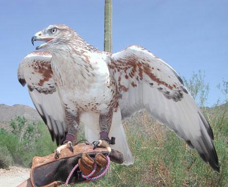 http://www.desertmuseum.org/visit/images/ferg02_450.jpg