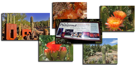 Collage of photos from the cactus garden