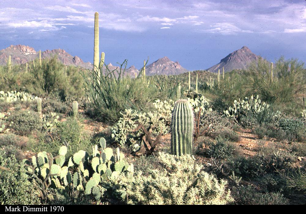 Sonoran Desert Cooling Thunderstorms