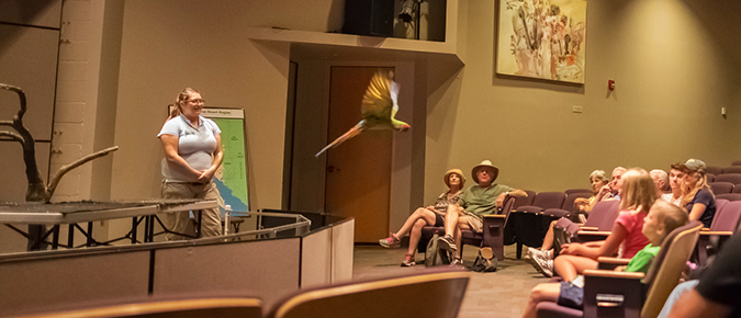Parrot flying in theater aisle