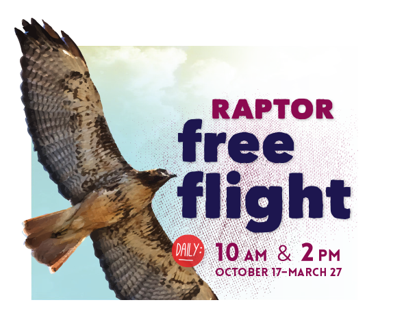 Raptor Free Flight: Daily 10am and 2pm October 17 through March 27