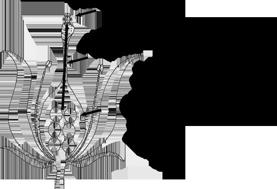 Coati club newsletter april 2015 illustration of flower bud cross section ccuart Images