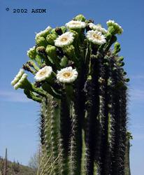1000  images about Desert Beauty on Pinterest | Desert flowers ...