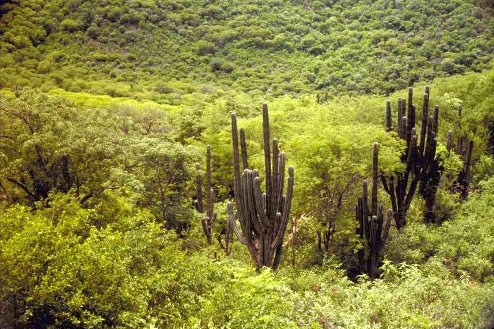 Alamos Vegetation TDF Gallery