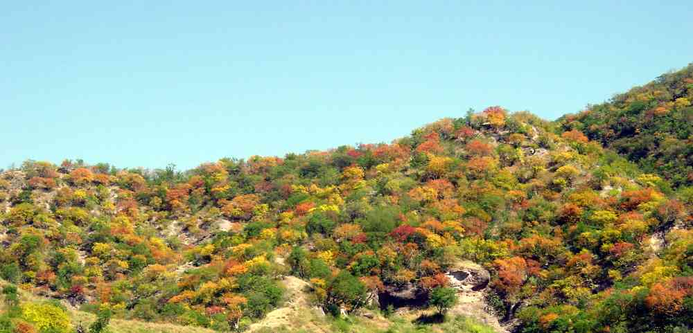 Alamos Seasons